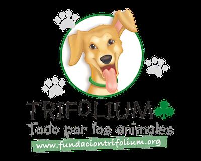 Fundación Trifolium y Cannopolis