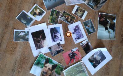 Curso de Iniciación a la Comunicación animal – nivel 1